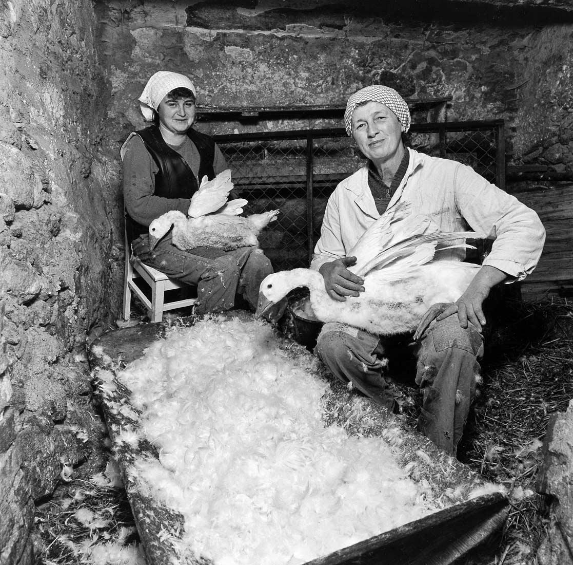Bäuerin mit Schwiegertochter beim Gänserupfen - Stadl bei Brennberg 1987